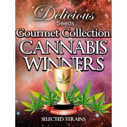 Gourmet Collection Cannabis Winners 2. 3 x 3 stk