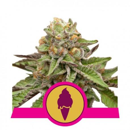 Fat Banana 5 stk feminiseret